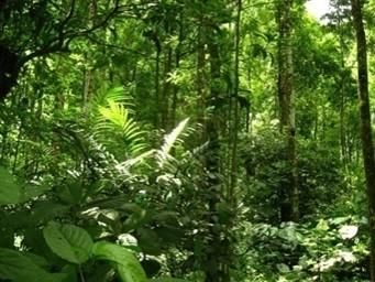 bioma hutan pegunungan
