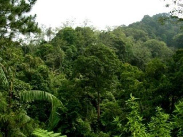 Ekosistem Hutan Pegunungan