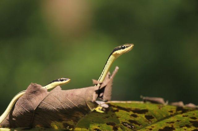 Habitat Alami sebagai Solusi Kepunahan Spesies